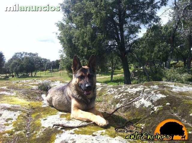 RESIDENCIA PERROS - foto 3