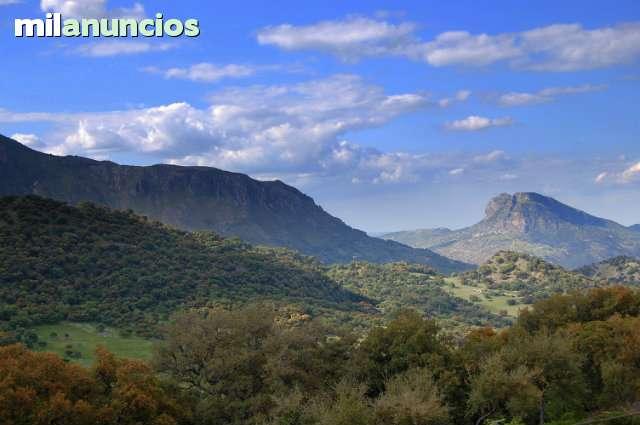 PUERTO DE LOS ALAMILLOS - foto 1