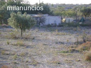 CTRA. DE ARCHENA-MULA A 3KM DE ARCHENA - foto 2