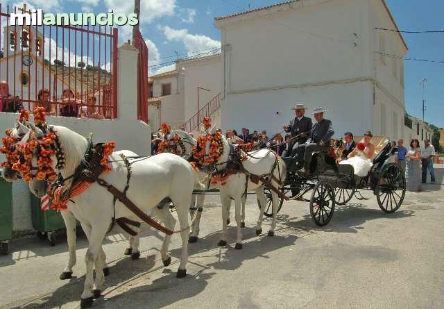 COCHES DE CABALLOS BODAS Y COMUNIONES - foto 1