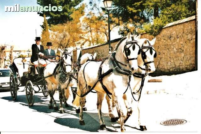 COCHES DE CABALLOS BODAS Y COMUNIONES - foto 4