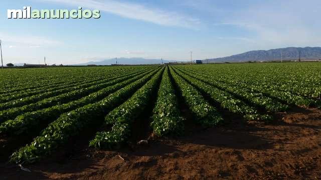 INGENIERO AGRÓNOMO - foto 4