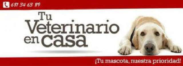 VETERINARIO A DOMICILIO. MASCOTA FELIZ!! - foto 1