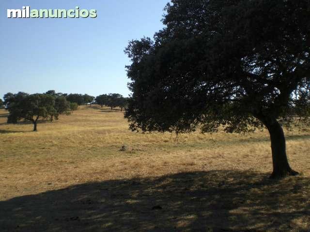 VILLANUEVA DE CÓRDOBA- ADAMUZ -ANDALUCIA - foto 3