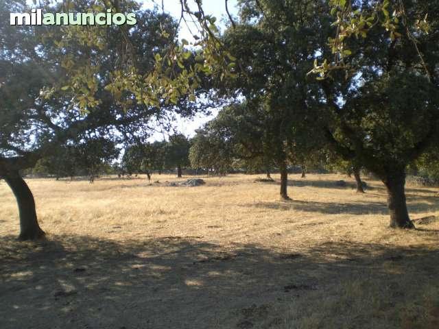 VILLANUEVA DE CÓRDOBA- ADAMUZ -ANDALUCIA - foto 4