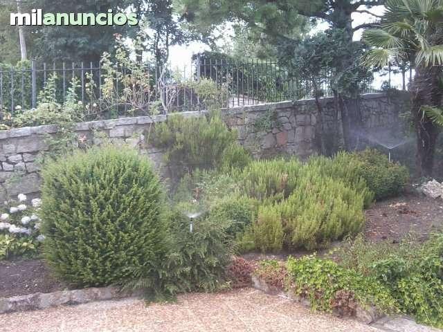 MADRID LUZ Y JARDIN 629116808 - foto 5