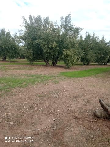 SERVICIOS AGRICOLAS - foto 4