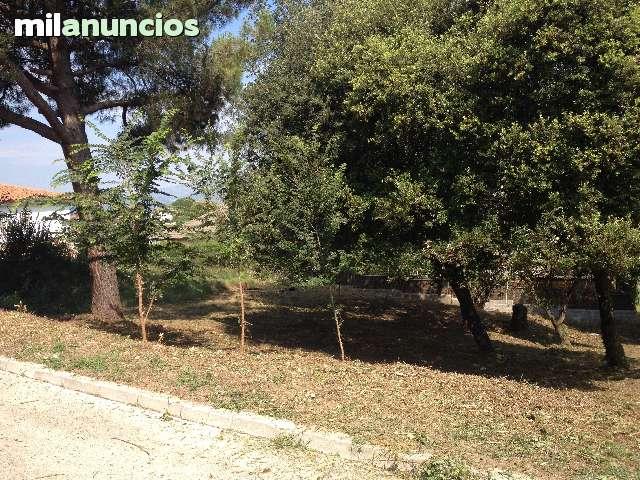 LIMPIEZAS DE PARCELAS - foto 6