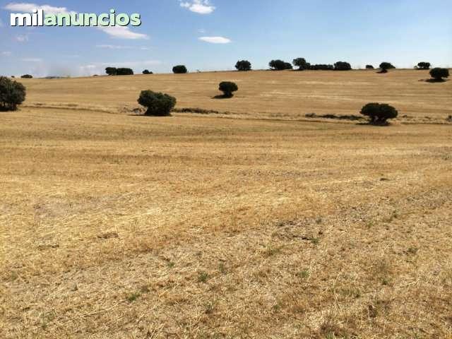 TALAVERA DE LA REINA.  A 1 HORA DE MADRID - foto 5