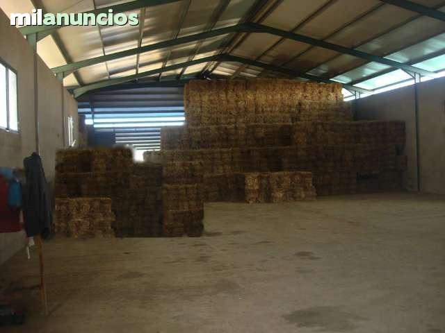 TOLEDO. CEBADERO DE TERNEROS CON 100 HAS - foto 4