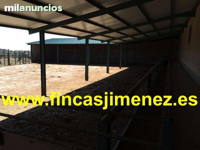 TOLEDO. CEBADERO DE TERNEROS CON 100 HAS - foto 1