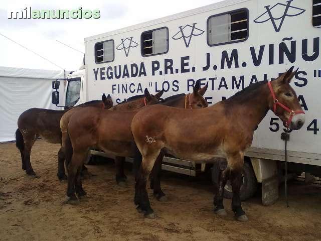 FABRICACION,  ALQUILER Y VENTA DE CARPAS - foto 6