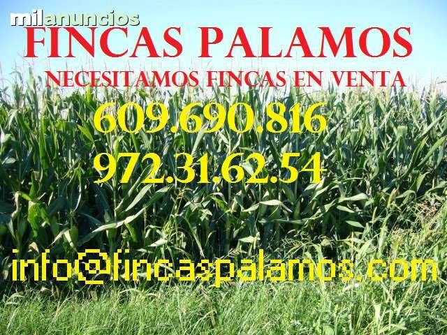 BUSCAMOS FINCAS ENTRE 600-1000 HA - foto 1