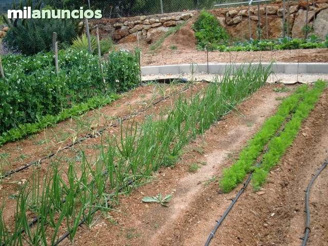 TERRENO AGRICOLA CERCA DE JAVEA