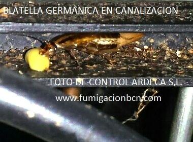 #FUMIGACIONES CONTROL DE #PLAGAS EMPRESA - foto 2