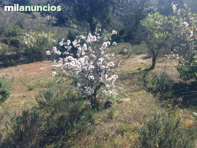 FINCAS CENICIENTOS-ALMOROX-VILLA D PRADO - foto 1