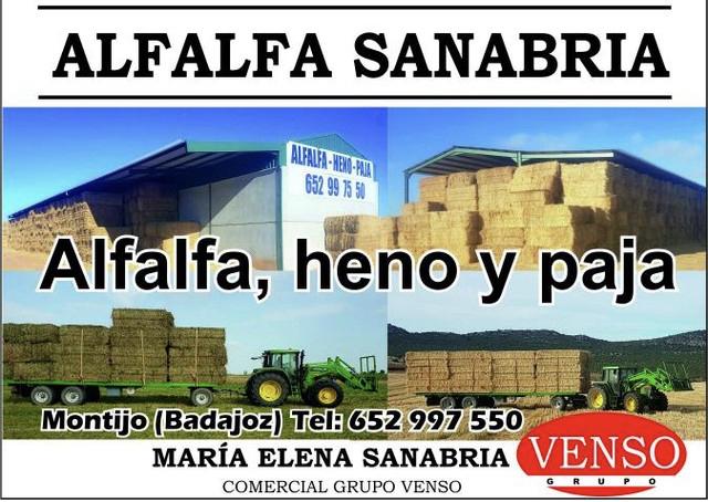 ALFALFA EN RAMA 1A