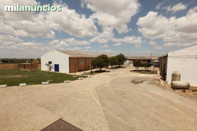 PARKING CARAVANAS ALCALA DE GUADAIRA - foto 3