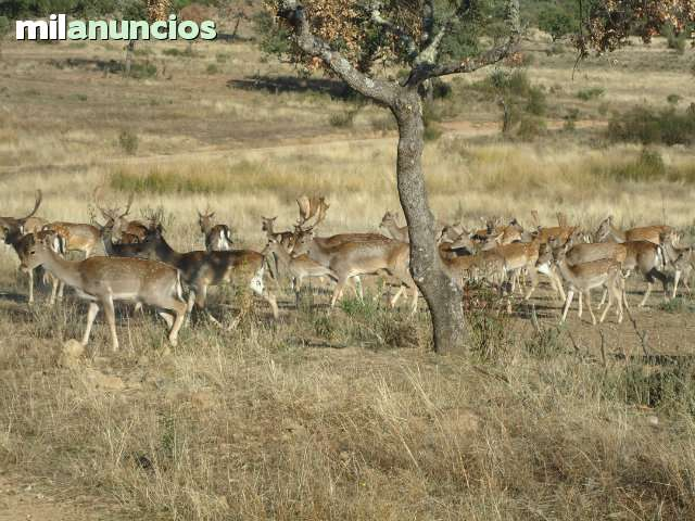 MONTES DE TOLEDO - foto 1