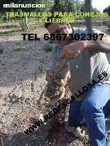CAPILLOS PARA CONEJO ANTIBROZA LO MEJOR - foto 5