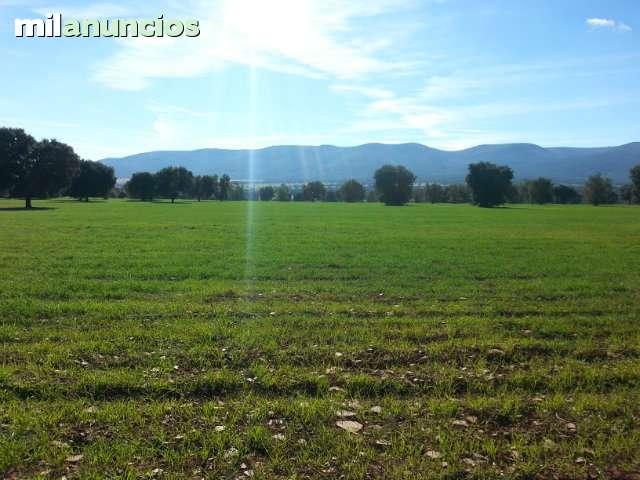 MONTES DE TOLEDO - foto 3