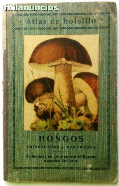 HONGOS COMESTIBLES Y VENENOSOS - foto 1