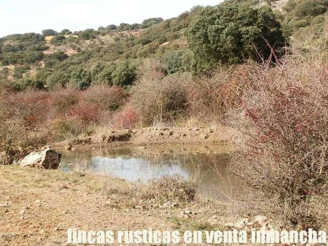 FINCA EN VENTA INMANCHA LABOR MONTE CAZA - foto 4