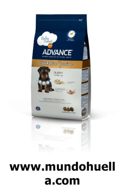 ADVANCE YORKSHIRE TERRIER JUNIOR, 1, 5KG