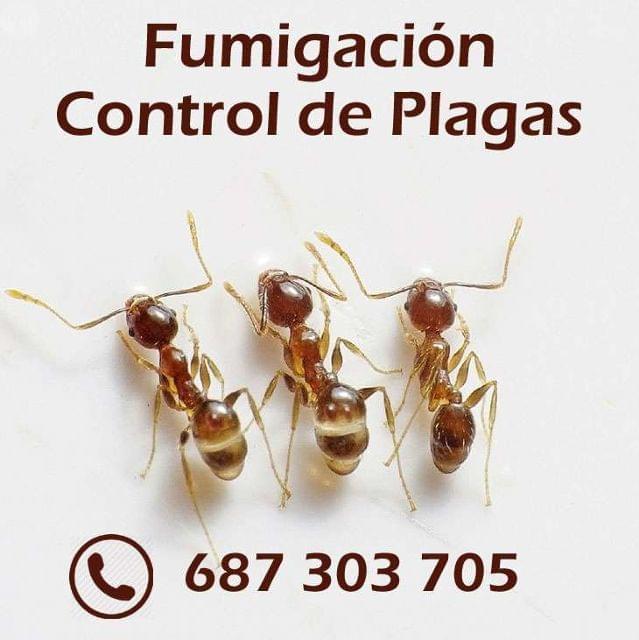 FUMIGACIÓN - CONTROL PLAGAS SEVILLA - foto 1