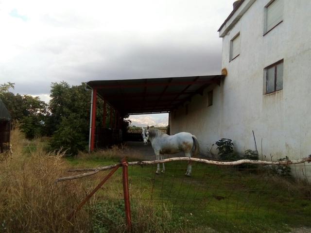 FINCA EN BELICENA - foto 9