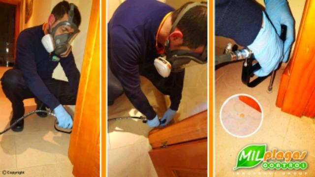 CONTROL DE PLAGAS Y LIMPEZA DE ALJIBES - foto 2