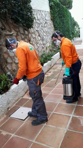 CONTROL DE PLAGAS Y LIMPEZA DE ALJIBES - foto 8