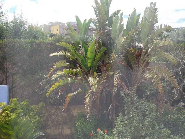 TACORONTE-EL SAUZAL - foto 2