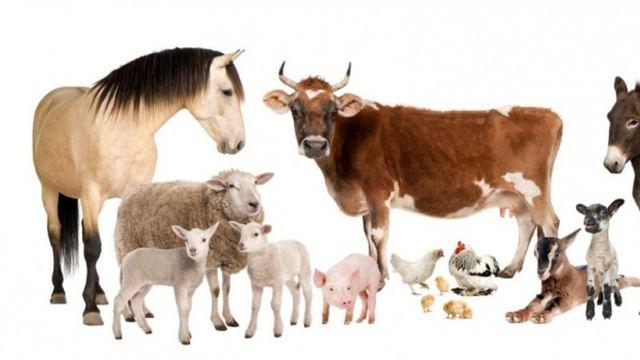 SE ADOPTAN ANIMALES* GRATIS PARTICULAR