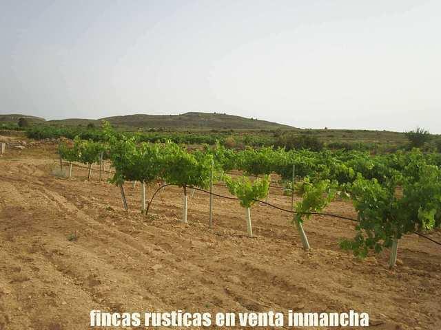 FINCA VENTA INMANCHA VIÑA-CAZA YEGUADA - foto 8