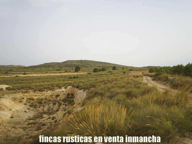 FINCA VENTA INMANCHA VIÑA-CAZA YEGUADA - foto 9