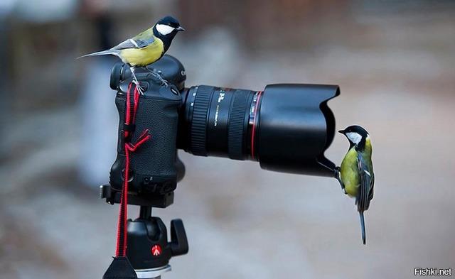FOTÓGRAFÍA Y VÍDEO - foto 1