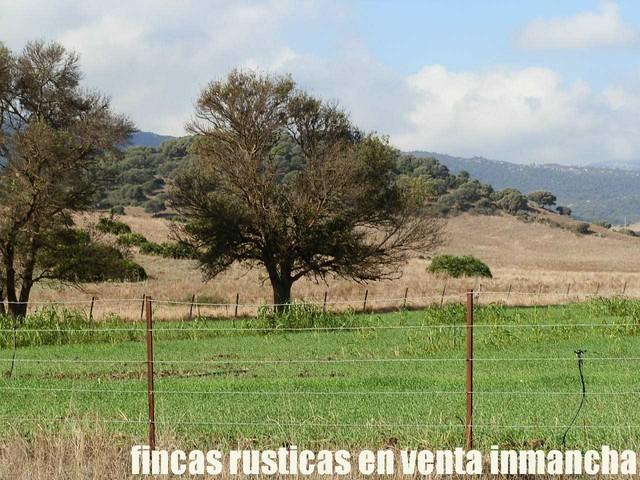 Mil Anuncios Com Ganado Compra Venta De Fincas Rústicas Ganado En Cádiz Sin Intermediarios