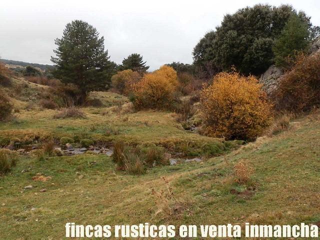 FINCA EN VENTA INMANCHA GANADERA-CAZA - foto 8