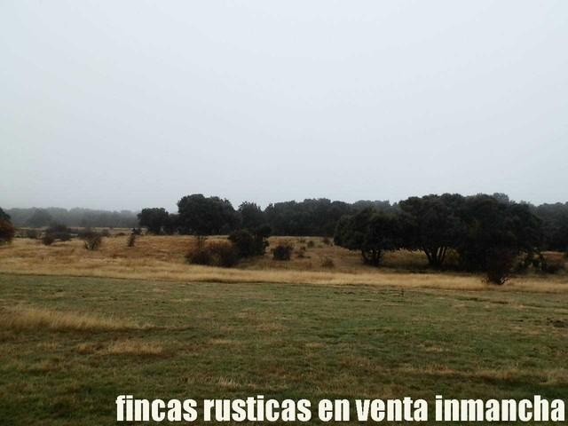 FINCA EN VENTA INMANCHA GANADERA-CAZA - foto 3