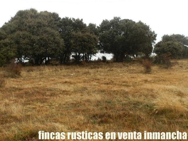 FINCA EN VENTA INMANCHA GANADERA-CAZA - foto 6