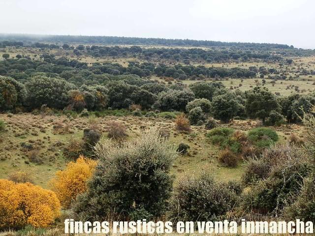 FINCA EN VENTA INMANCHA GANADERA-CAZA - foto 5