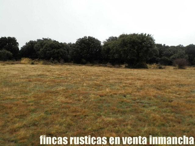 FINCA EN VENTA INMANCHA GANADERA-CAZA - foto 7