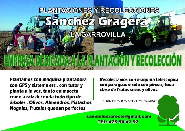 PLANTACIONES CON MÁQUINA CON GPS - foto 2