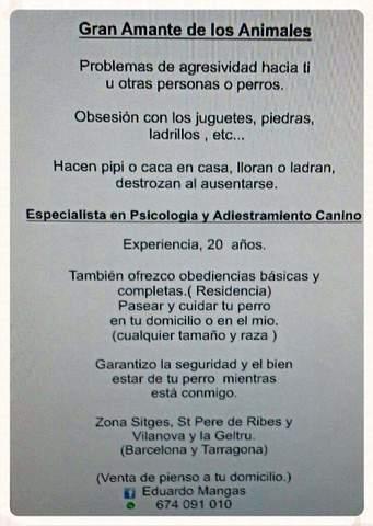 PASEADOR DE PERROS - foto 2