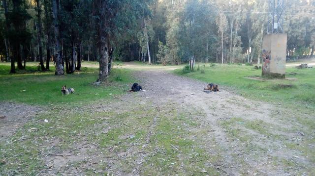ADIESTRAMIENTO CANINO - foto 1