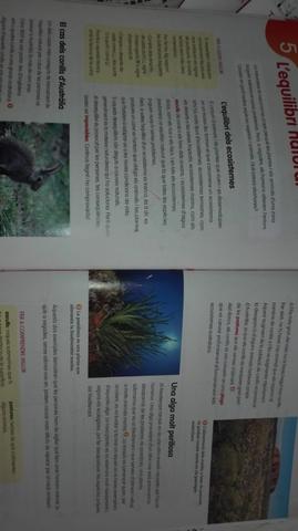 LIBROS DE 4 DE PRIMARIA - foto 3