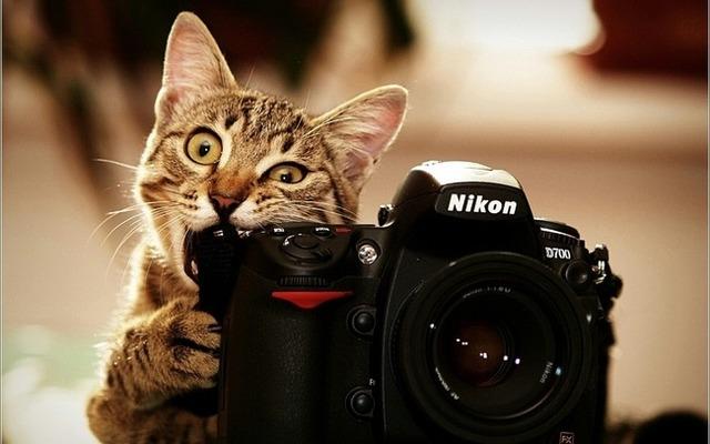 REPORTAJES FOTOGRÁFICOS Y DE VÍDEO - foto 1