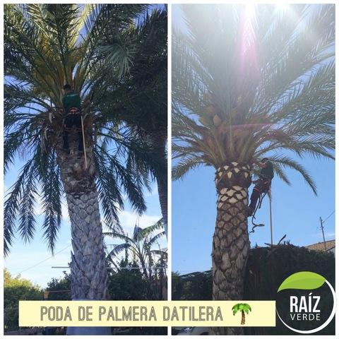 PODAS Y TALAS DE ÁRBOLES Y PALMERAS - foto 5