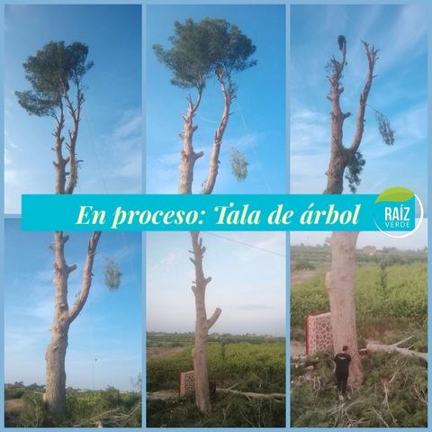 PODAS Y TALAS DE ÁRBOLES Y PALMERAS - foto 8